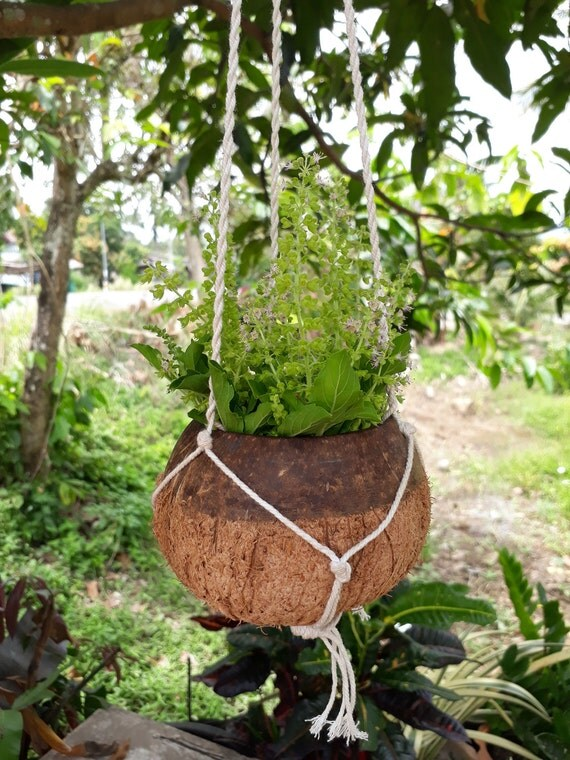 DIY Two Tone Natural Coconut Shell Hanging Planter Pot Outdoor - Diy two tone painted pots