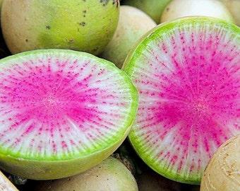 Watermelon Red Radish Organic Healthy 50+ Seeds #1115