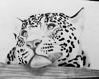 Sweetness jaguar Framed original drawing