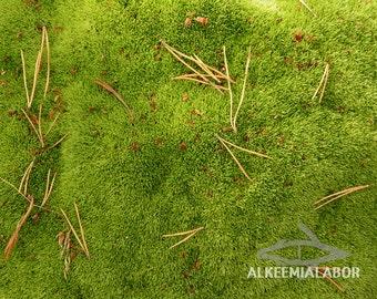 Green moss carpet - fine art photography, instant download printable art, wall art, home decor, nature, office decor