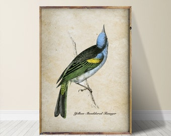 Bird Print Bird Art Bird Wall Art
