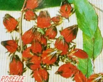 230 Seeds Thai Roselle Gongura (Hibiscus Sabdariffa) FREE SHIPPING
