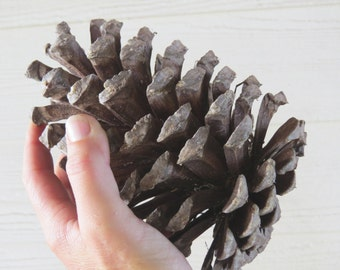 "7-8"" Jumbo Pine Cone, Large Pine Cone, Jumbo Pinecone, Large Pinecone, Huge Pine Cone, Huge Pinecone, Pine Cone Craft, Pine Cone Decoration"