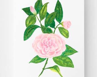 Camellia Flower Orignal Art, 5x7, botanical art, botanical illustration, floral art, flower illustration, garden art, birthday gift
