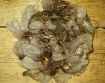 1 oz. grey moorit lambs lock, unwashed but clean and soft, length is 6 - 8 inches.