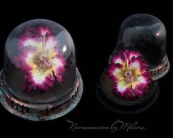 Toothy iris