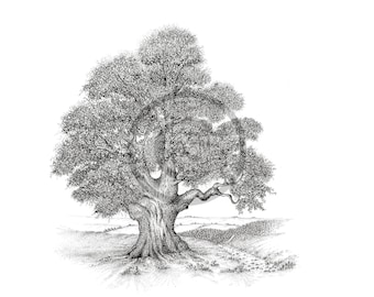 Old Oak Tree. Giclee Fine Art Print. Black and White, Fine Line, Pen & Ink Drawing.