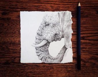 Wrinkles Elephant Original Graphite Pencil Drawing Africa Animal Art 5x5 inches Decor Modern