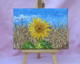 Sunflower in cornfield 5