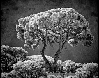 Soft Trees of Belem