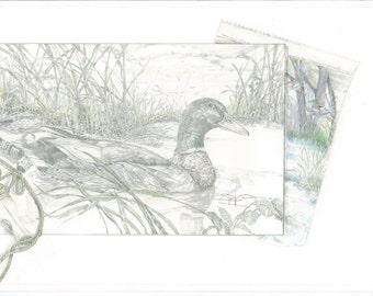 Mallard Drake with Field Sketch