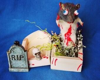 Taxidermy rat/zombie/coffin/halloween/anthropomorphic