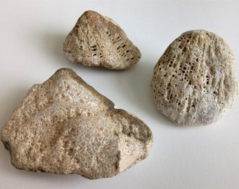 Fossil Coral Fossil Set Of 3 Natural Coral Fossil Honeycomb Natural Specimen