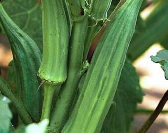 30 Organic Okra Seeds Heirloom Non-GMO ''Clemson Spineless 80''