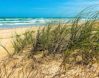 Port Aransas Dune Grass