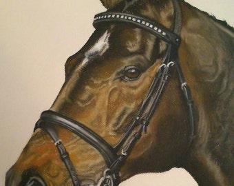commission pet and horse portraits