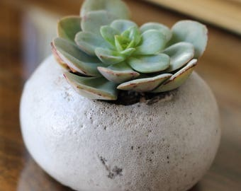 Raku ceramic roller and succulent
