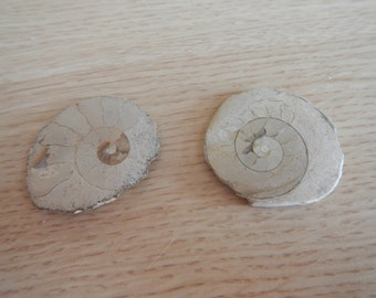 Two (2) Polished Ammonite Slices (Madagascar)