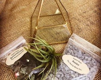 Geometric DIY Terrarium Kit