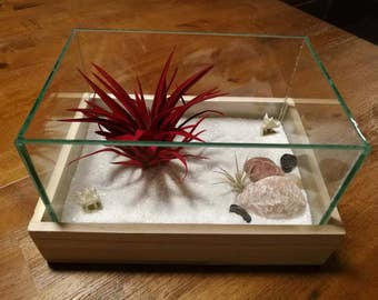 Red Air Plant Zen Terrarium
