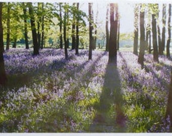 "Bluebells, Dockey Wood, Ashridge Estate 6x8"" Print"