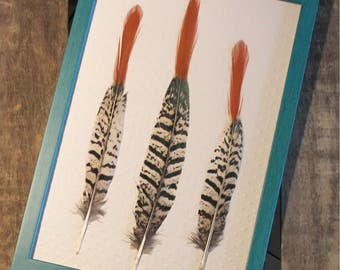 Lady Amherst pheasant feathers under framework / unique / the pen box
