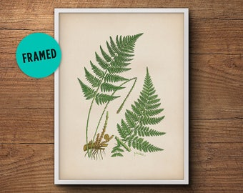 Framed leaf print of ferns, Fern leaf print, Fern wall print, Vintage botanical print, Framed botanical art, Framed art, Kitchen decor