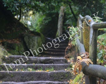 Steps - nature photography, trees, forest