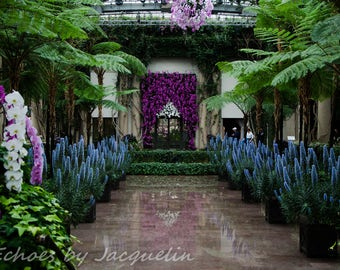 Orchid archway