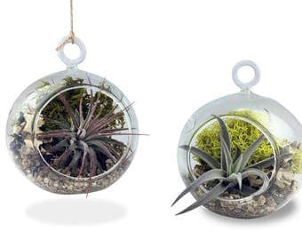 """Cute Farms 3.5"""" Hanging Bubble Terrariums, Set of Two 