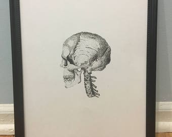 Bones Collection (Skull) Print