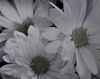 flower, flower photo, black and white photo, nature, nature photo, wall art, flower art, home decor, flower picture