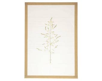 Herbarium - Construction 3