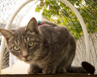 Cat enclosures & cat-proofing for your patio, balcony, or yard! Enhance your outdoor space for you and your kitty!