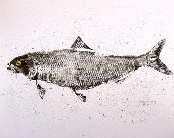 GYOTAKU fish Rubbing One American Shad 8.5 X 11 quality Art Print Cottage Decor by artist Barry Singer