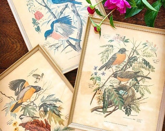 A Little Birdie Told Me... Vintage Arthur Singer Bird Framed Under Glass Picture Prints Set of Three Trio Artwork Wall Decor