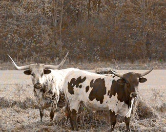 Longhorn Cattle Cow Photograph Bovine Photo Bull Artwork Sepia Style Nature Photography Wildlife Decor Brown And White Fine Art Animal Print