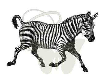 Digital Zebra Artwork Image Transfer Illustration Download Printable Clip Art