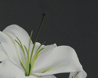 White Lily Flower Painting - Botanical Floral Wall Art