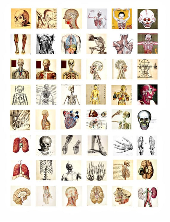 human anatomy medical science collage sheet 1 inch squares clip art digital download images printable graphics craft papers