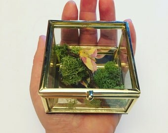 Rossy Maple Moth Glass Display Box