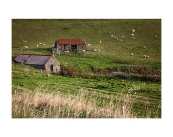 Stone Sheds Fine Art Photography Shetland Scotland farm rural sheep rolling green hills simple pastoral peaceful beautiful home decor Art