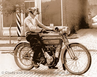 Bad to the Bone, large original photograph of Boxer dog smoking cigarette and riding a vintage Harley Davidson motorcycle