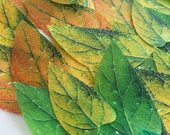 20 safari edible leaves - green emerald leaves - safari edible cupcake decoration - emerald leaves - green cake decoration by Uniqdots