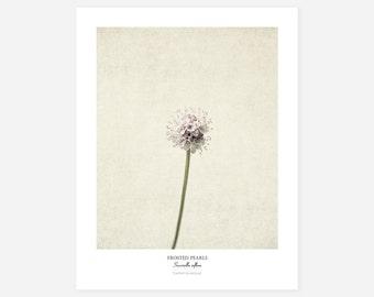 Frosted Pearls Original Art Print - Botanical Wall Art - Flower Poster - Large Botanical Print
