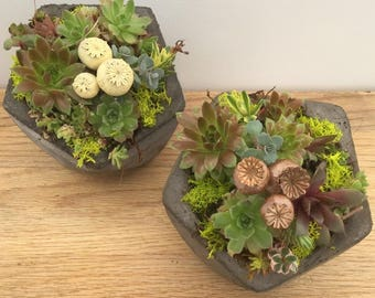 Cement Planter of Succulent Gems, You choose with or without