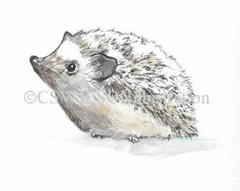 Mister Hedgehog - Fine Art Print