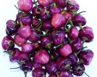 Cheiro Roxa Chili Pepper Seeds, Capsicum Chinense - Brazilian, Rare, Purple Hot Pepper-Makes a Stunning Magenta Vinegar Infusion