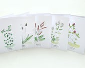 Plant Cards SET, Wild Herbs, Gift for Gardeners, Greeting Card, Plant Identification, Plant Lover, Botanical Card, Kitchen Herb, Wild Plants