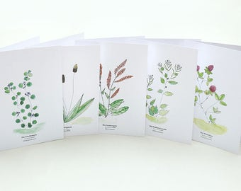 Plant Cards SET | Useful Plants | Wild Herbs | Gift for Gardeners | Greeting Card with Plant Identification | Plant Lover | Botanical Card